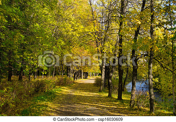 Park in the fall - csp16030609