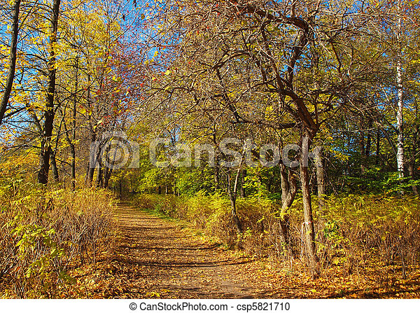 Park in the fall - csp5821710