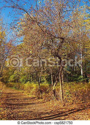 Park in the fall - csp5821750