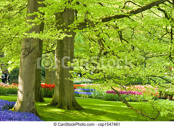 Park with trees and flowers in spring - csp1547461
