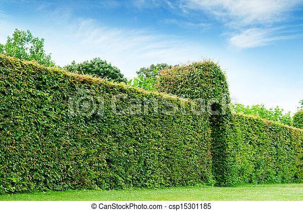 park, zielony, lato, płot - csp15301185