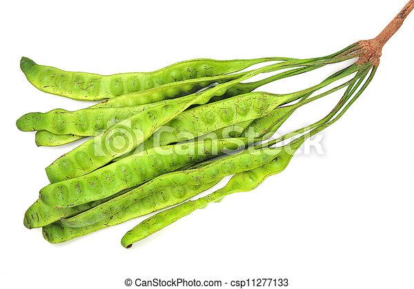 Parkia speciosa - csp11277133