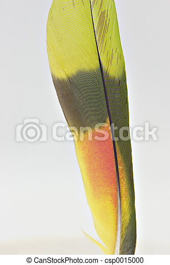 parot feather - csp0015000