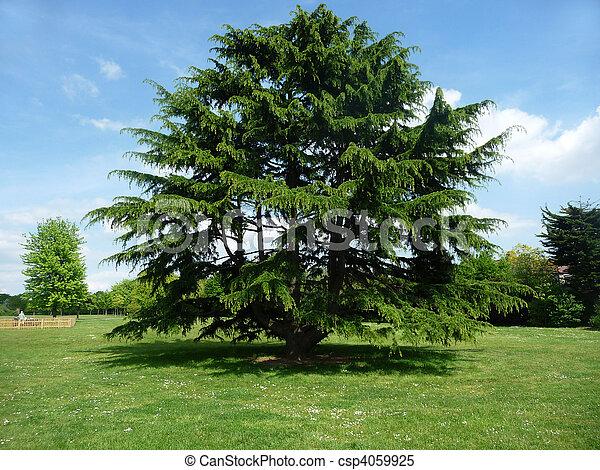 Árbol en el parque de arcilla - csp4059925
