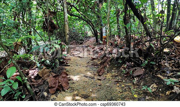 Camino en un parque inverso natural - csp69360743