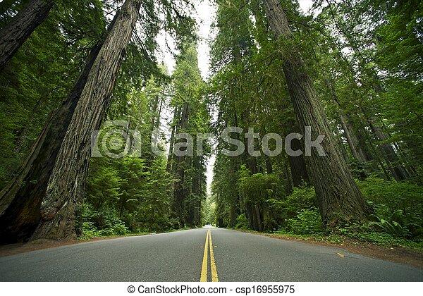 parque estado, redwood - csp16955975