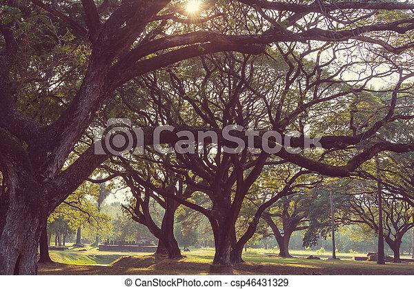 parque - csp46431329