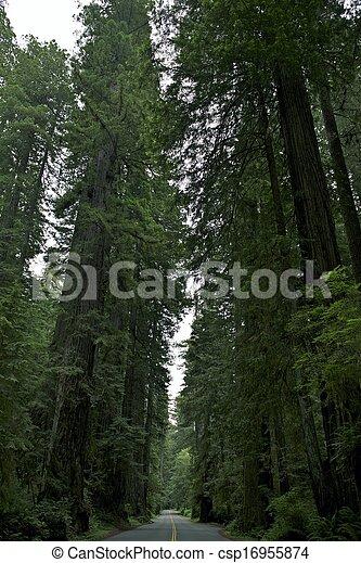 Parque nacional Redwood - csp16955874
