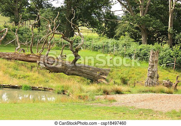 Un árbol en un parque rural - csp18497460