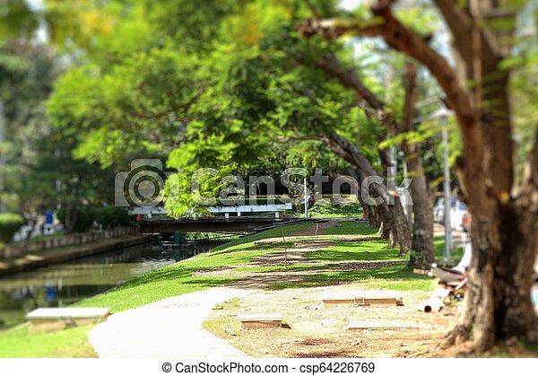 Camino en el parque - csp64226769