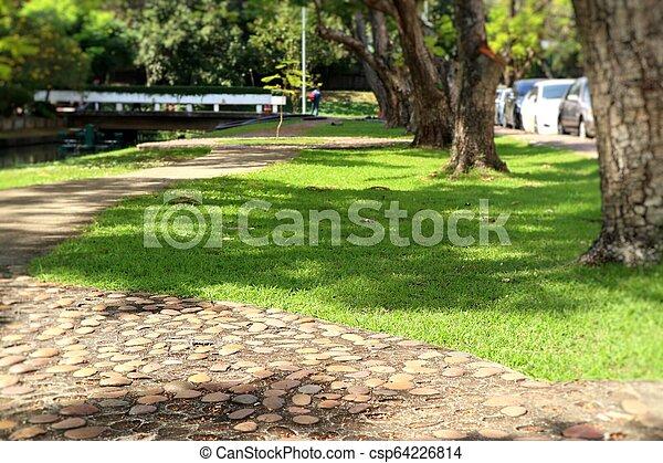 Camino en el parque - csp64226814