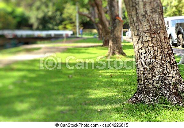 Camino en el parque - csp64226815