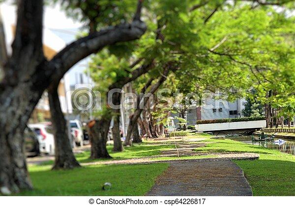 Camino en el parque - csp64226817