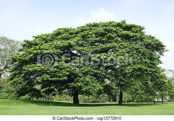 parque verde, árvore - csp13772910