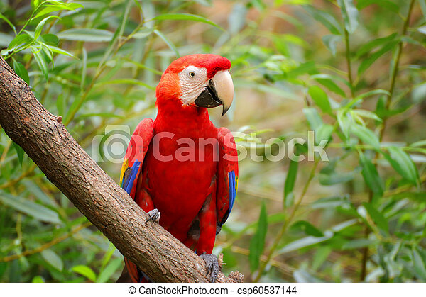 Parrot Ara, Macaw on the brunch - csp60537144