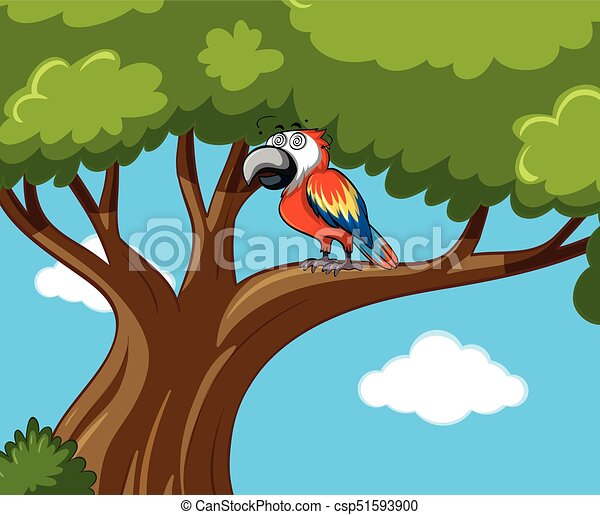 Parrot bird on the branch - csp51593900
