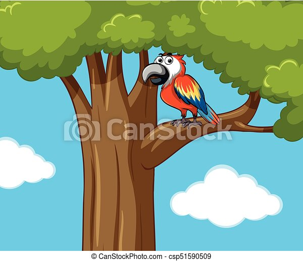Parrot bird on the tree branch - csp51590509