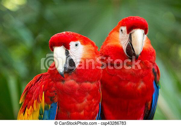 parrot bird sitting on the perch - csp43286783