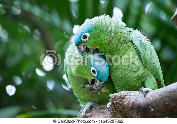 parrot bird sitting on the perch - csp43287862