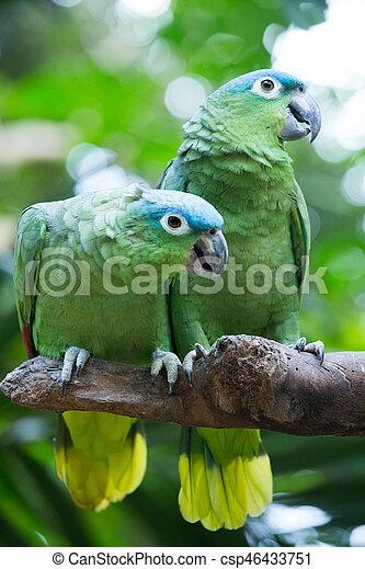 parrot bird sitting on the perch - csp46433751