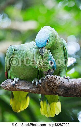 parrot bird sitting on the perch - csp43287992