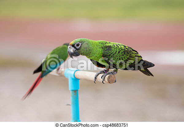 Parrot on a branch - csp48683751