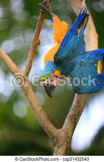 Parrot on a branch - csp31432543
