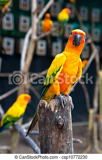 Parrot on a branch. - csp10772230