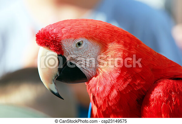 Parrot - Red Blue Macaw Speaking - csp23149575