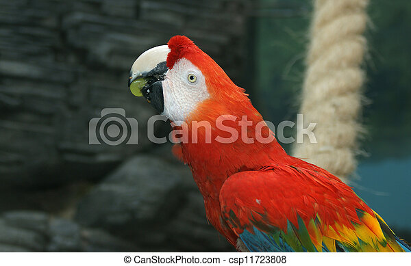 Parrot - red blue macaw - csp11723808