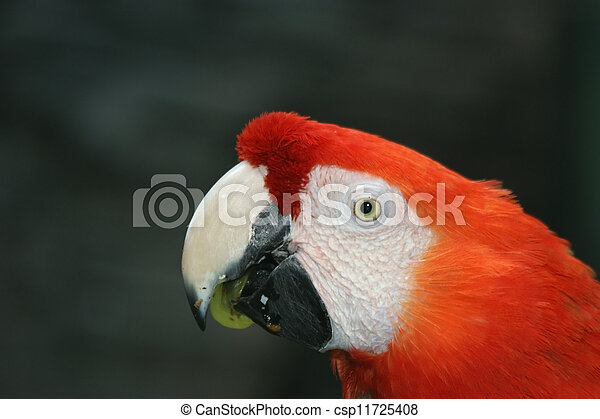 Parrot - red blue macaw - csp11725408