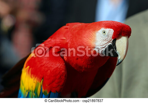 Parrot - Red Blue Macaw - csp21897837