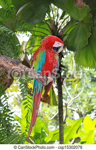 Parrot sitting on the branch - csp15302079