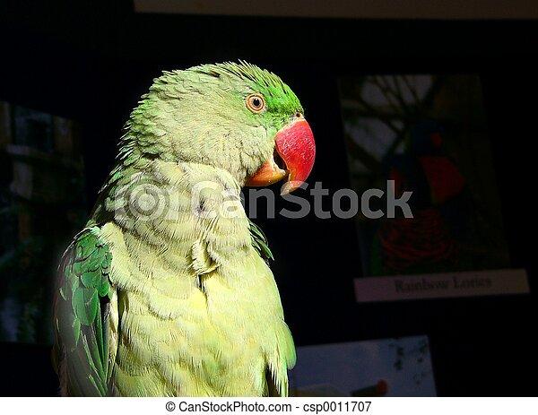 parrot#3 - csp0011707