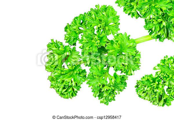 parsley., 葉, 湾 - csp12958417