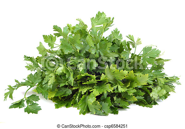 Parsley bunch isolated on a white background. - csp6584251