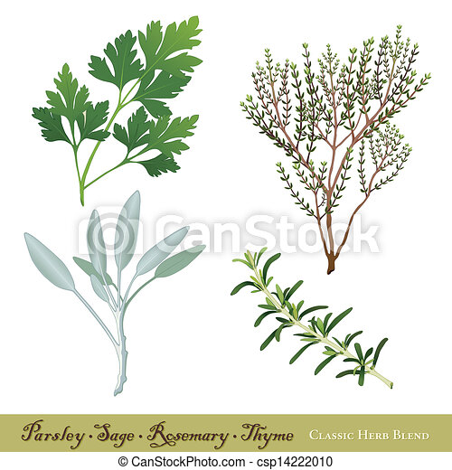Parsley, Sage, Rosemary and Thyme - csp14222010