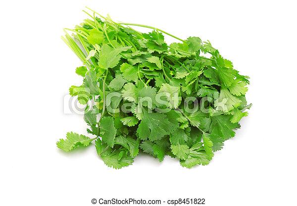 parsley - csp8451822