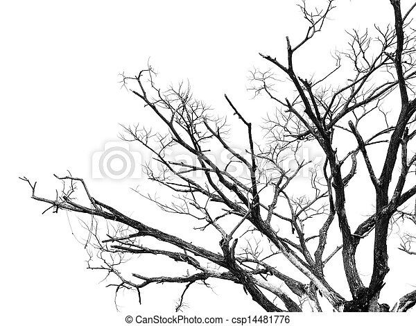 Part of dead tree isolated on white background - csp14481776