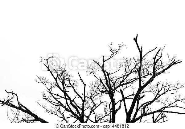 Part of dead tree isolated on white background - csp14481812