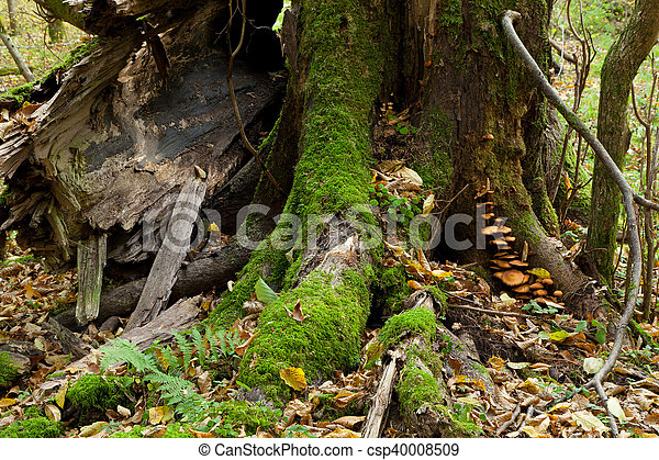 Partly declined stump with fungi - csp40008509
