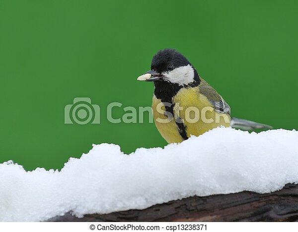 Parus major in the snow. - csp13238371