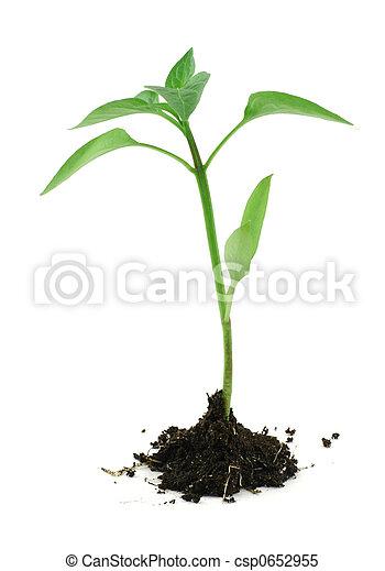 pasgeboren, terrein, plant, witte , #2 - csp0652955