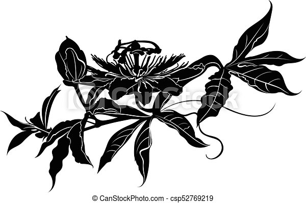 Line Drawing Flower Images : Blooming flowers graphics set download free vector art stock