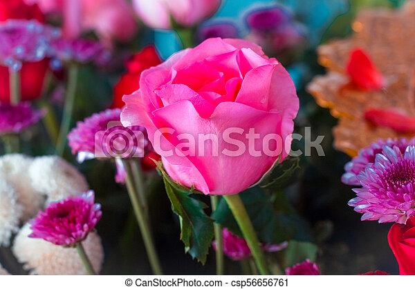 pastel, fleur, couleur, vendange, texture, créatif, conception, fond, rose,  modèle, bannière