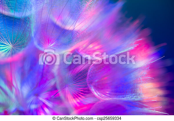 pastel, fleur, vif, coloré, pissenlit, résumé, -, fond - csp25659334
