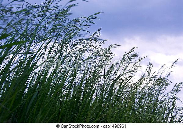 Hierba con semillas - csp1490961