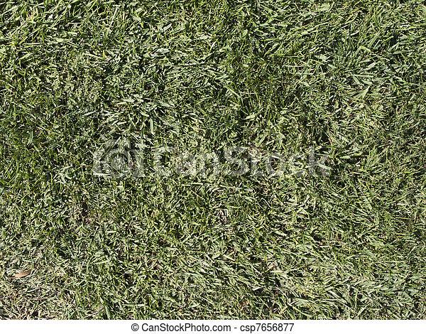 Una textura de hierba - csp7656877