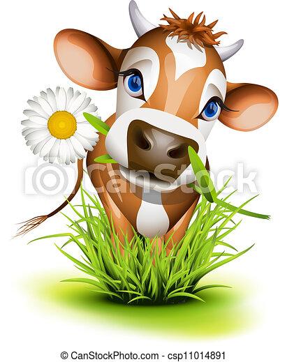 Una vaca de Jersey en la hierba - csp11014891