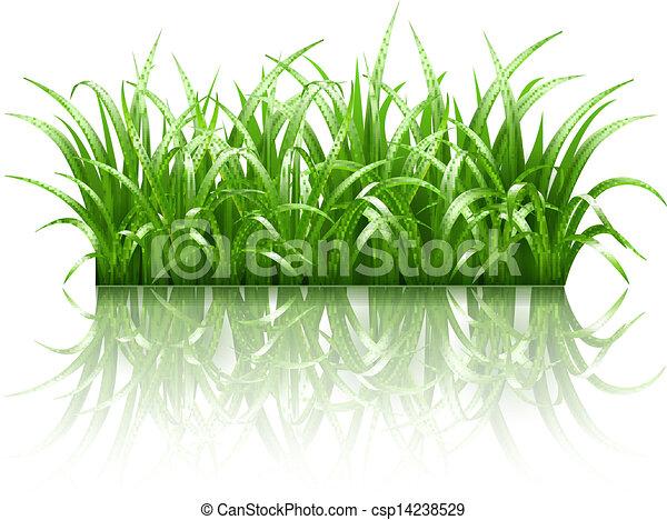 pasto o césped, vector, verde - csp14238529